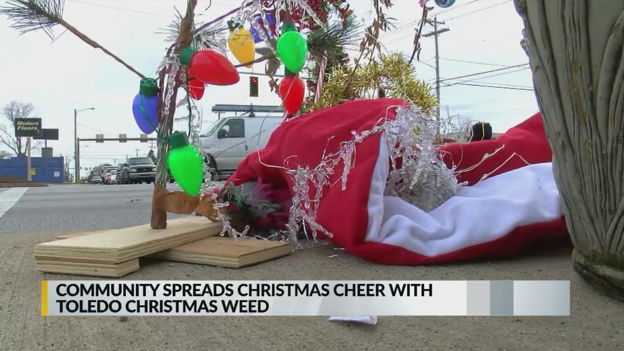 Toledo Christmas Weed_1545164069570.jpg.jpg