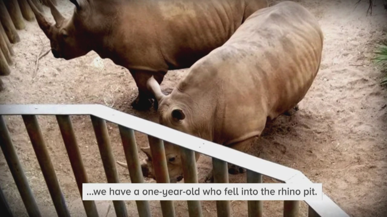 Zoo suspends exhibits after toddler enters rhino enclosure_1546471610924.jpg.jpg