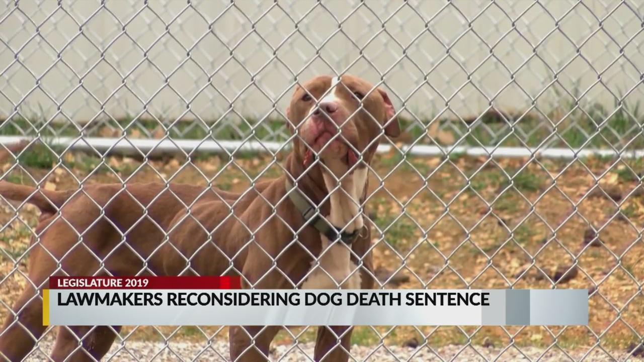 dog death sentence_1548789077661.jpg.jpg