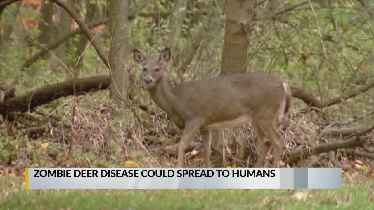 'Zombie deer disease' infects New Mexico deer, elk_1550188797011.jpg.jpg