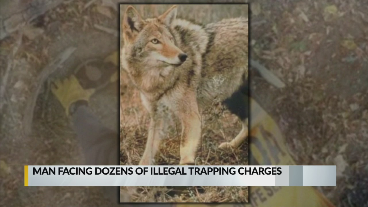 Man facing illegal trapping charges_1550106348791.jpg.jpg