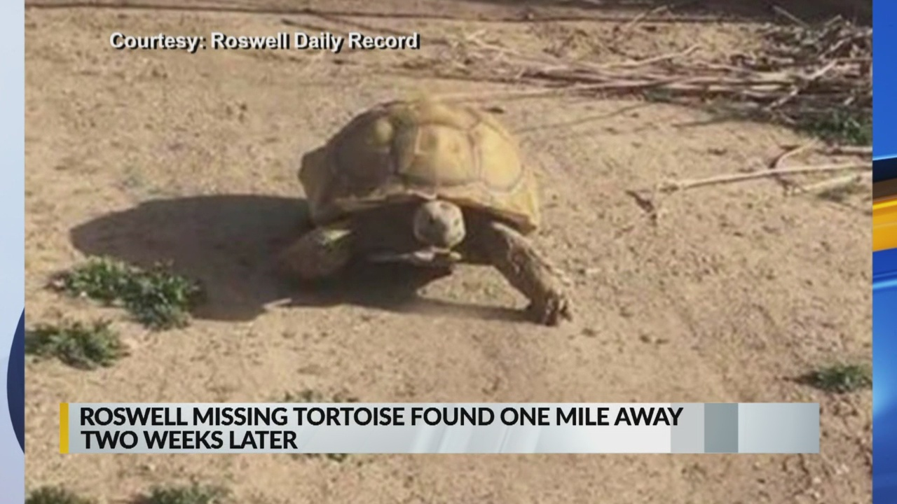 Missing pet tortoise returned to rightful owner_1551829177815.jpg.jpg