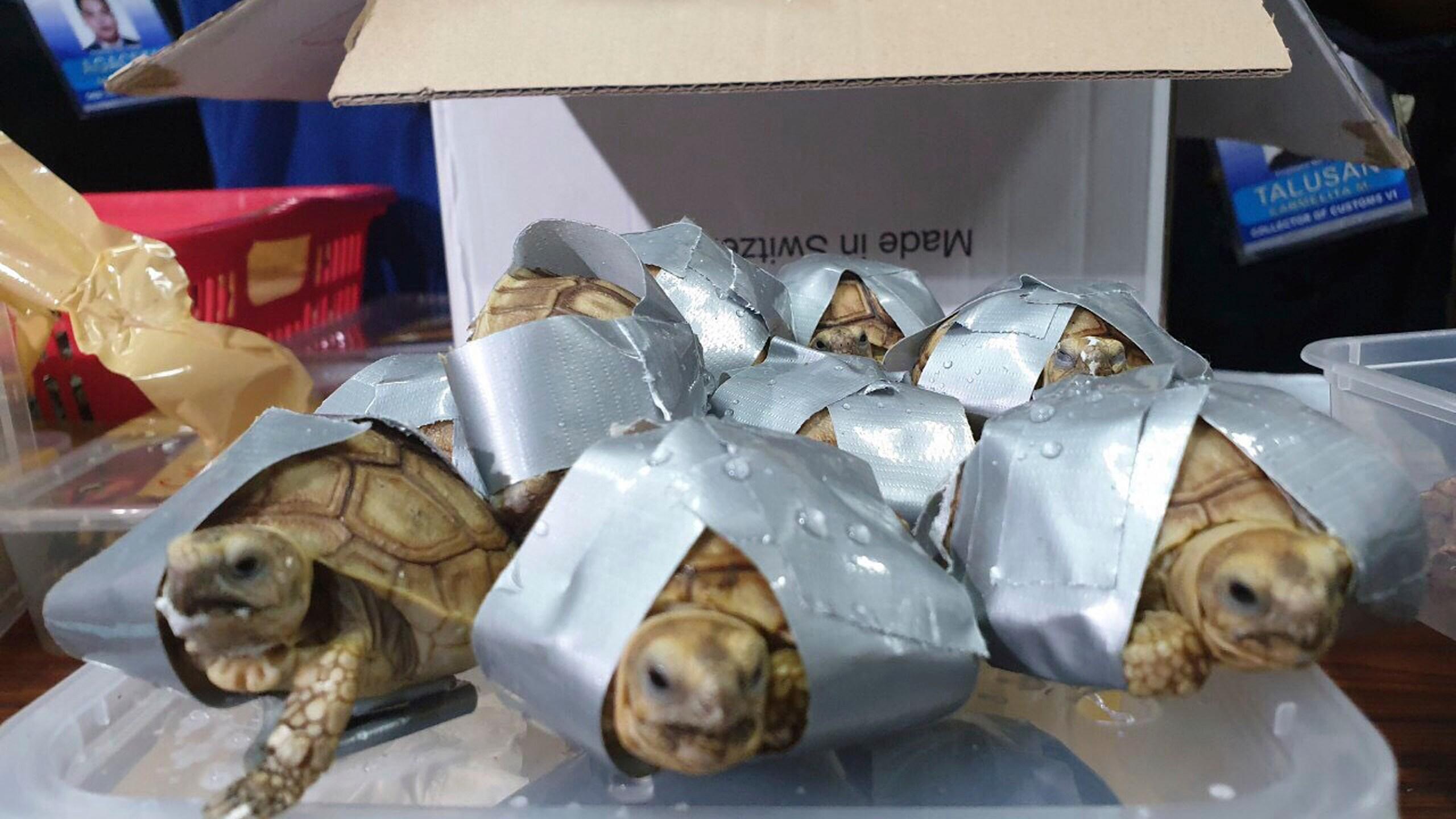 Philippines_Turtles_83196-159532.jpg41116362