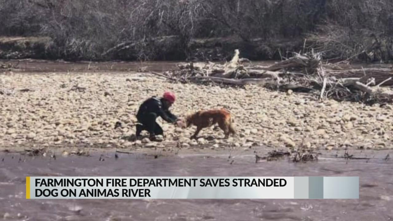 Farmington police rescue dog from island on Animas River_1555129435105.jpg.jpg