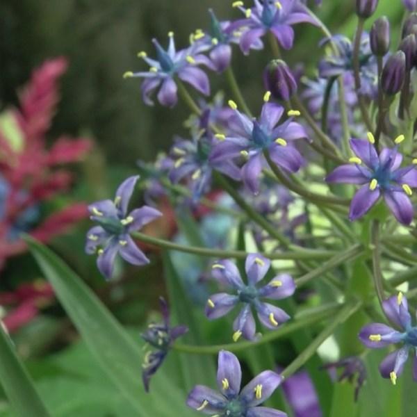 botanic garden flower show_1554581319276.jpg.jpg