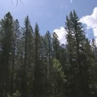 santa fe national forest stock_558519