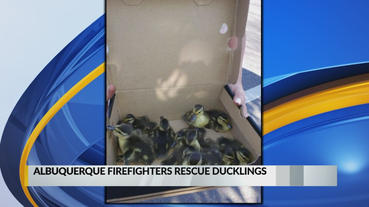 Albuquerque firefighters rescue ducklings from storm drain_1557958807210.jpg.jpg