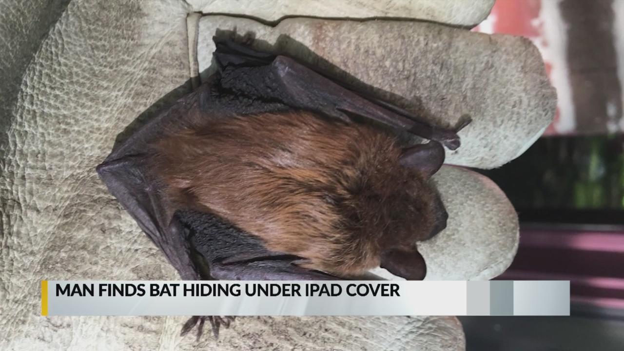 Man bitten by rabid bat hiding between iPad and case_1559168856057.jpg.jpg