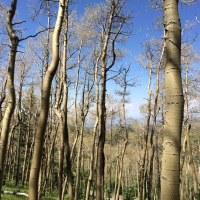bare trees_168707