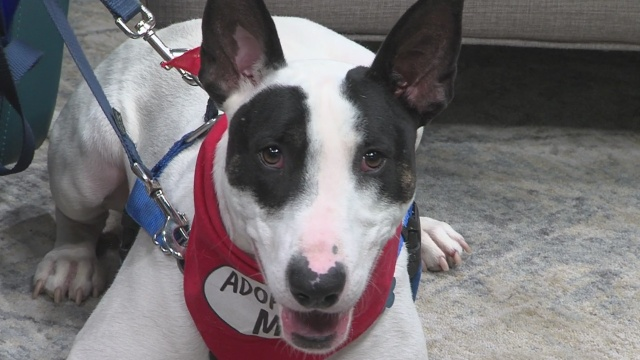 NMDOG's Hashbrown hopes for a home