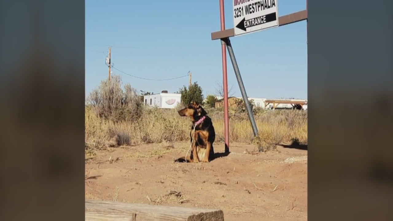 Dog Adoption Rio Rancho New Mexico