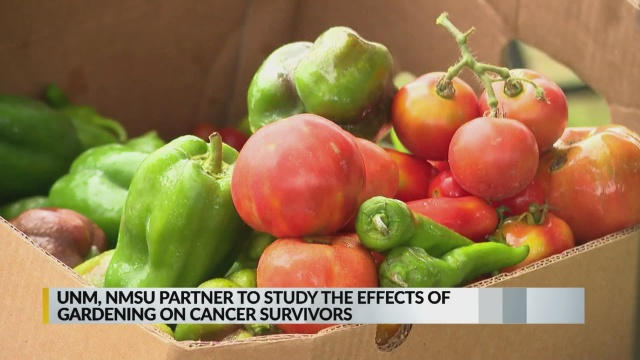 'Harvest for Health' study pairs cancer survivors with master gardeners