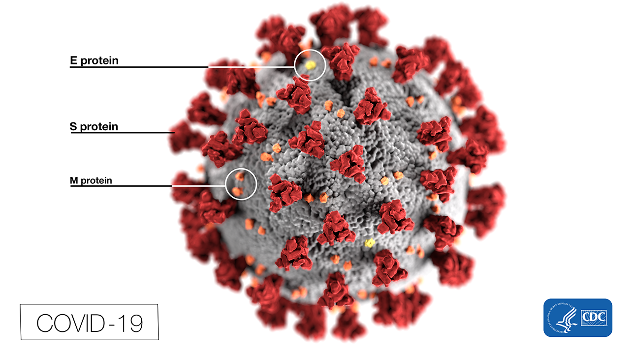 This illustration, created at the Centers for Disease Control and Prevention (CDC), reveals ultrastructural morphology exhibited by coronaviruses. Note the spikes that adorn the outer surface of the virus, which impart the look of a corona surrounding the virion, when viewed electron microscopically. In this view, the protein particles E, S, and M, also located on the outer surface of the particle, have all been labeled as well. A novel coronavirus, named Severe Acute Respiratory Syndrome coronavirus 2 (SARS-CoV-2), was identified as the cause of an outbreak of respiratory illness first detected in Wuhan, China in 2019. The illness caused by this virus has been named coronavirus disease 2019 (COVID-19). Source: CDC