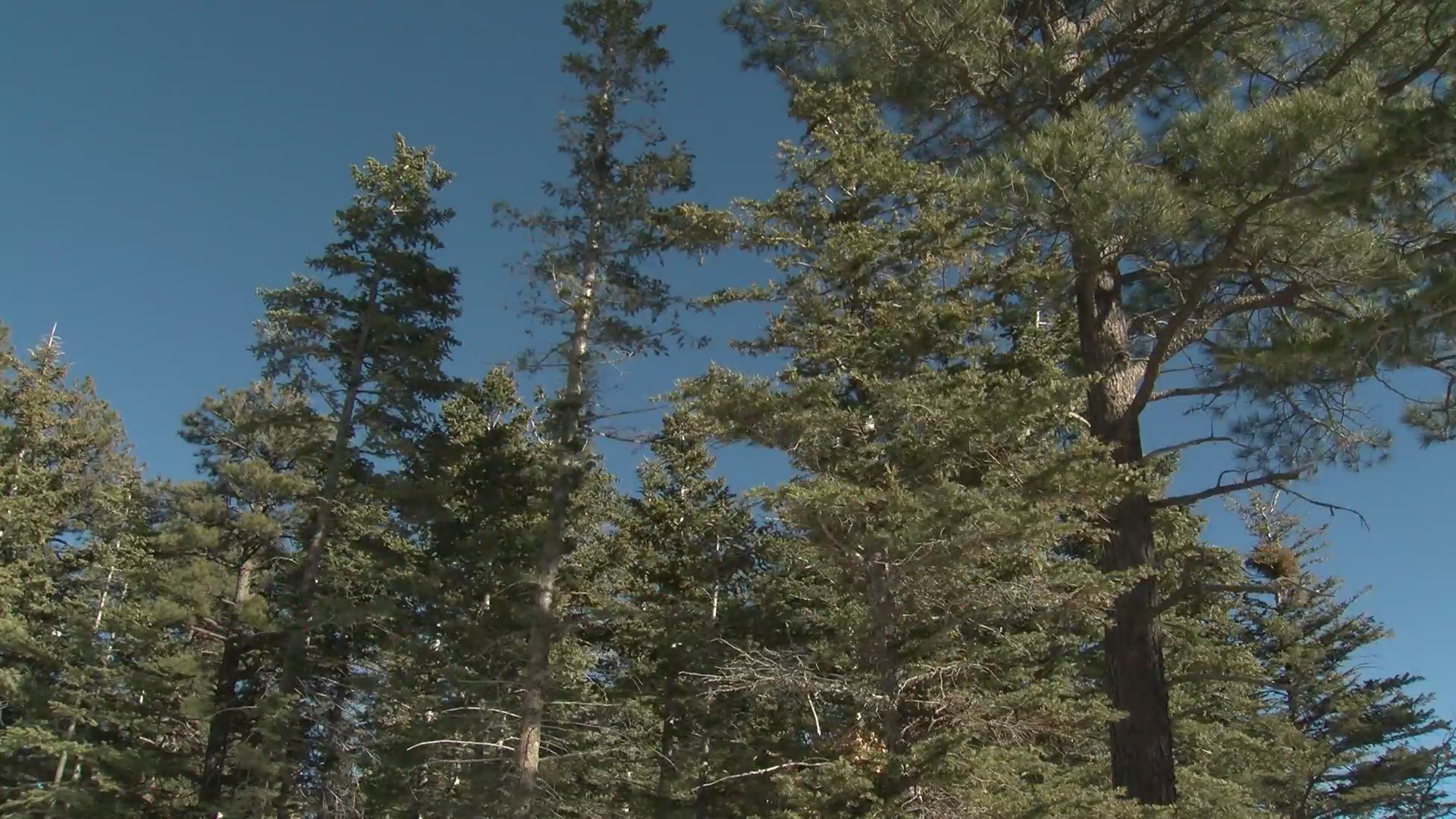 Santa Fe National Forest Considers Fall Prescribed Burns Krqe News 13